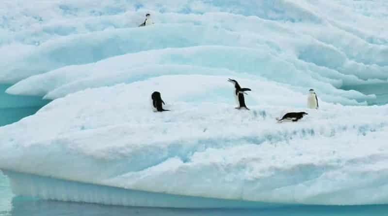 Antarctica telt miljoenen meer pinguïns dan gedacht