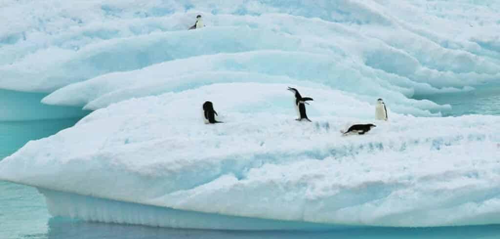 Antarctica voyago