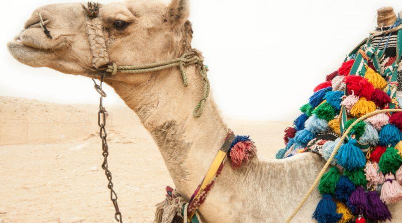 Egypte maakt flinke inhaalslag