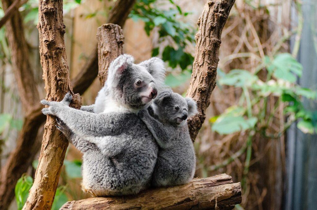 Last minute aanbieding camperhuur Australië