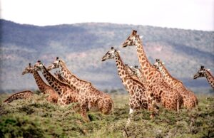 Ontdek dit stukje authentiek Zuid-Afrika
