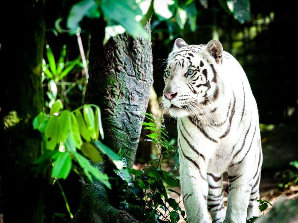 Booking.com: 5x leukste dierentuinen plus verblijf
