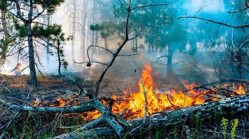 Bosbranden teisteren toeristische Balkanlanden