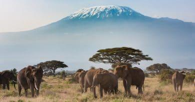 TUI: Kenia terug als vakantiebestemming