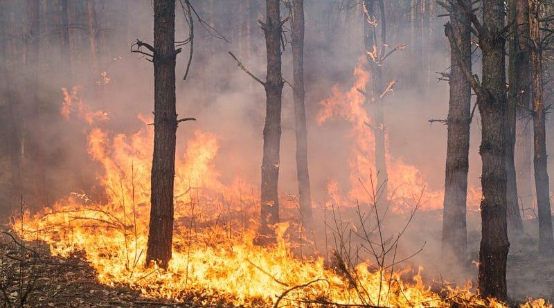 Dreiging bosbranden op de Balkan neemt af