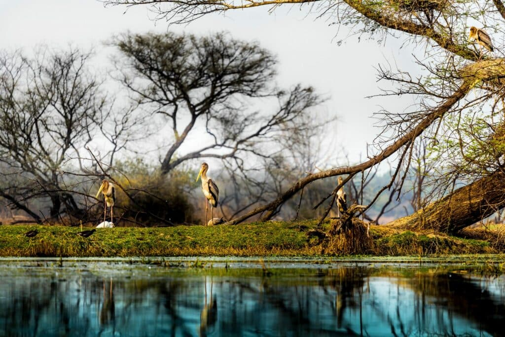7x wervelende herfstbreaks in India