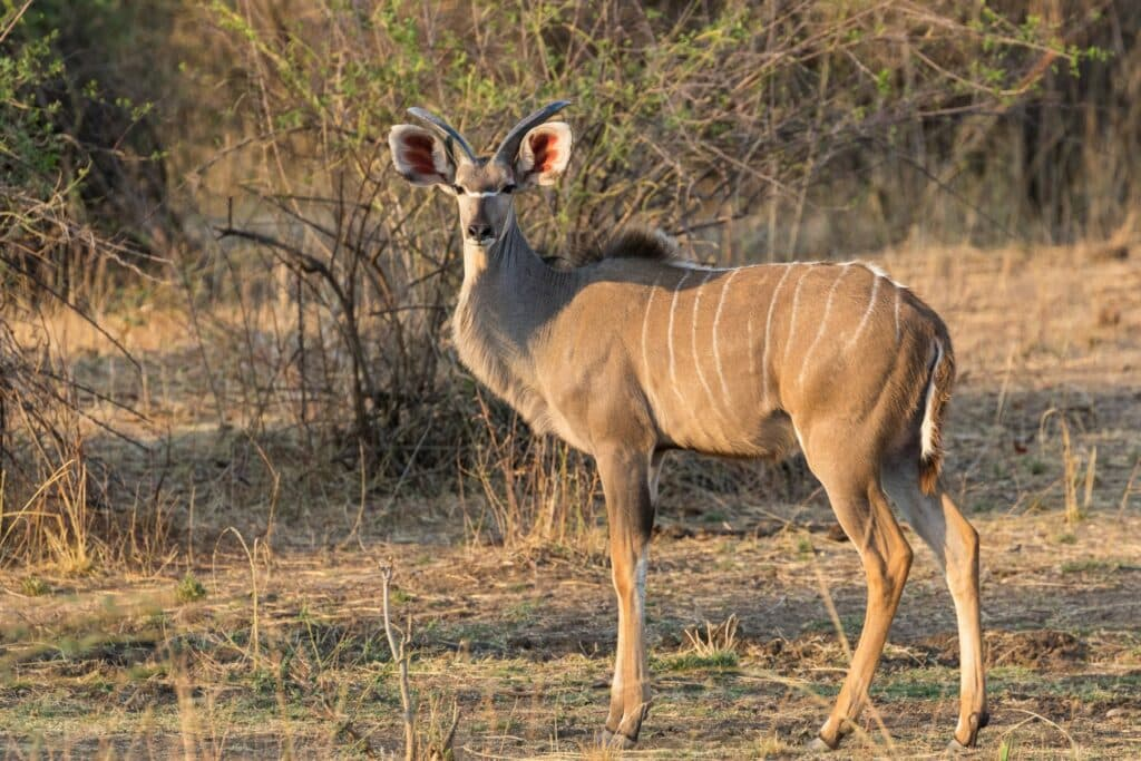 Top 10 bijzondere bestemmingen: Zambia #6