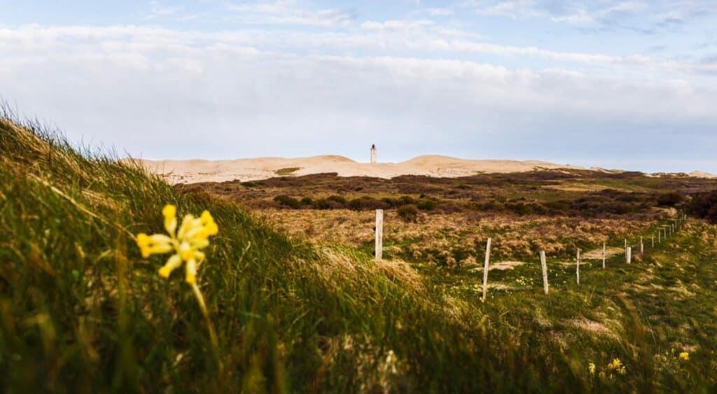 Denemarken: tijdens de winter- én zomermaanden