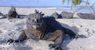 Top 10 unieke bestemmingen: Galápagos Eilanden #4
