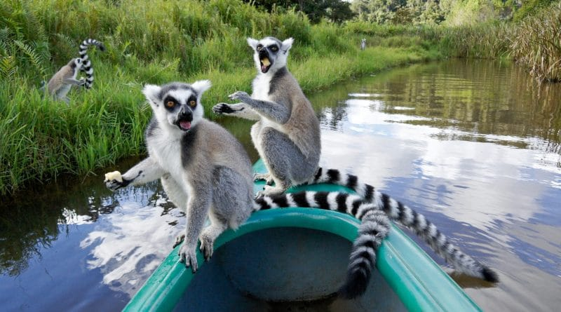 Afrikaanse eilanden: Madagaskar, Mauritius of de Seychellen?