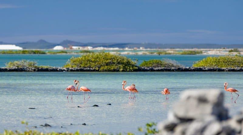 Heb jij al kennis gemaakt met de ABC-eilanden?