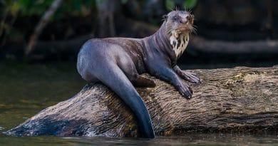 Peru heeft er een beschermd natuurgebied bij