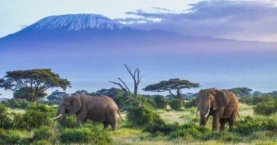 Top 10 winterzonbestemmingen: Tanzania #3