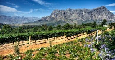 Drie belangrijke redenen om naar Zuid-Afrika te reizen
