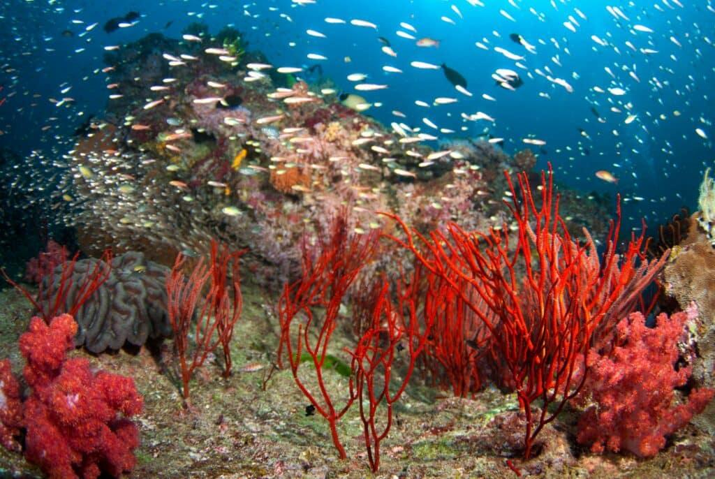 Belize Barrier Reef niet langer bedreigd
