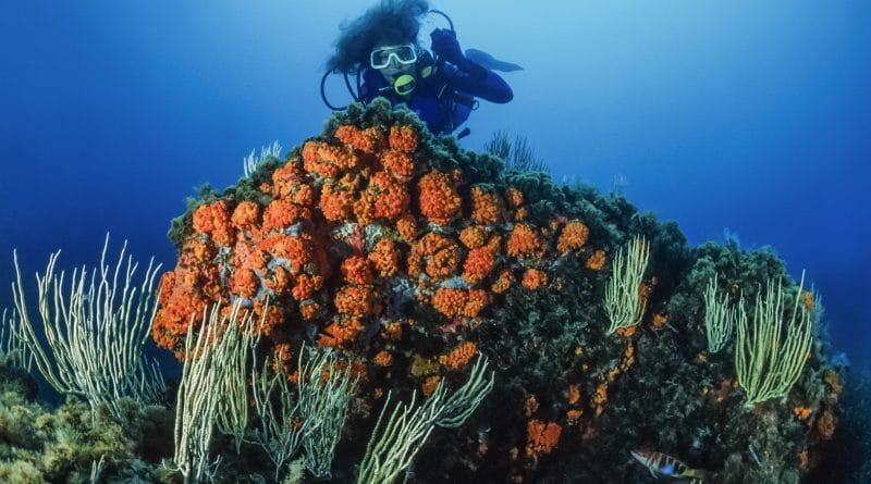 Onderwateravontuur in Tunesië: 7 te gekke duikspots