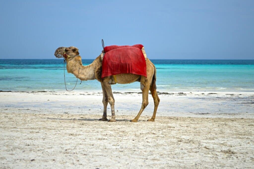 Verrassende eilandvakantie op Tunesisch Djerba