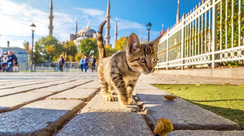 Airbnb viert Kattendag met 'purrfecte' overnachtingen