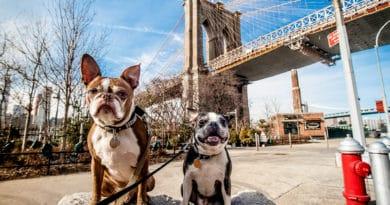 Ga naar deze pop-up ervaring voor honden in New York