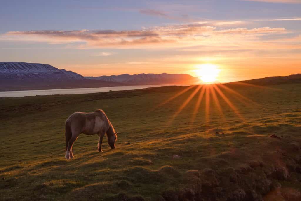 Jaag het echte IJsland-gevoel achterna