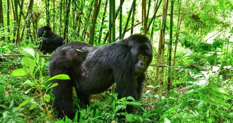 Vijf redenen om dit jaar nog naar Rwanda te gaan