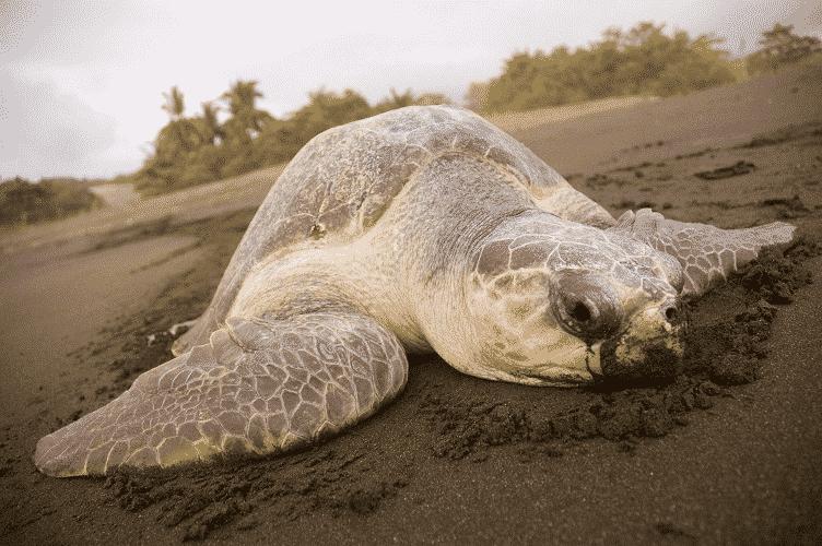 schildpadklein