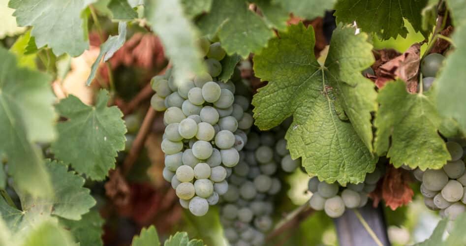 Rueda: 10 redenen om deze wijnt(r)ip niet te missen