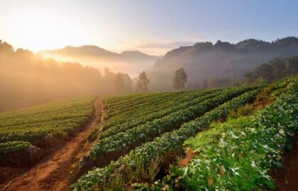 Zien en proeven op deze vijf plantages in Costa Rica