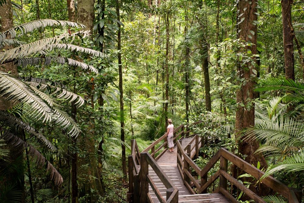 Daintree Rainforest, een unieke plek op aarde.