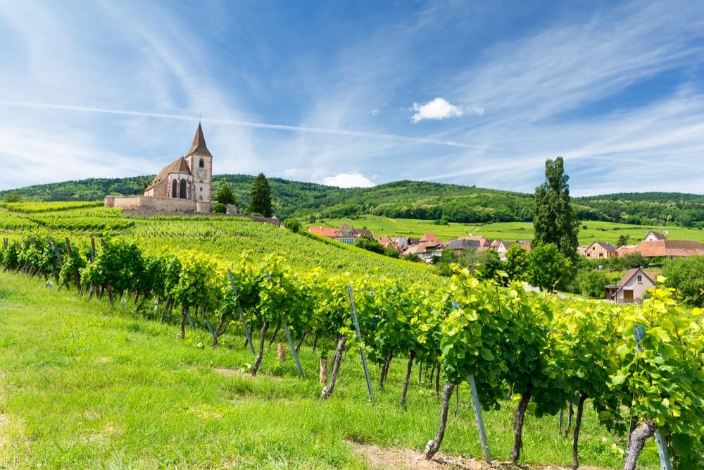 Wijnroute in de Elzas, een van de oudste wijnroutes van Frankrijk.