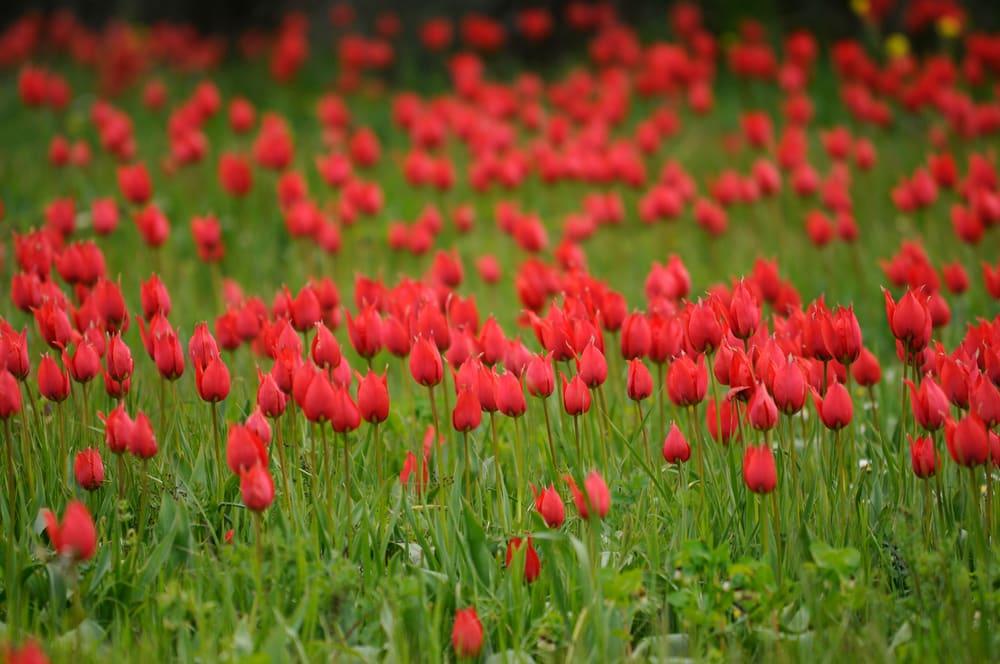 Vlaktes met kleurrijke bloemen.