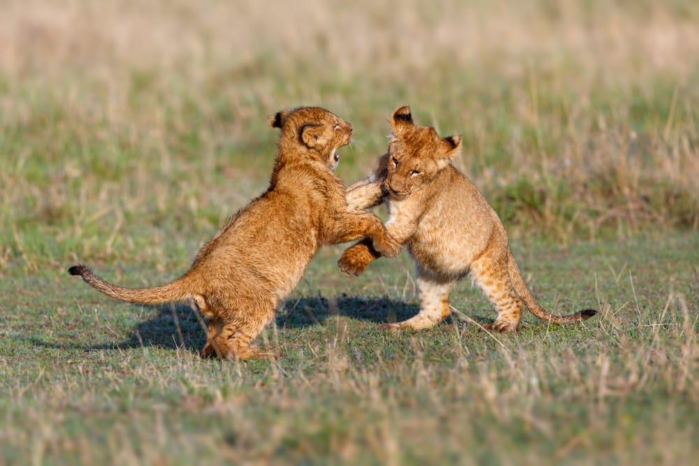 Wildlife bescherming