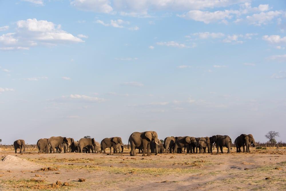 Olifanten spotten in Botswana