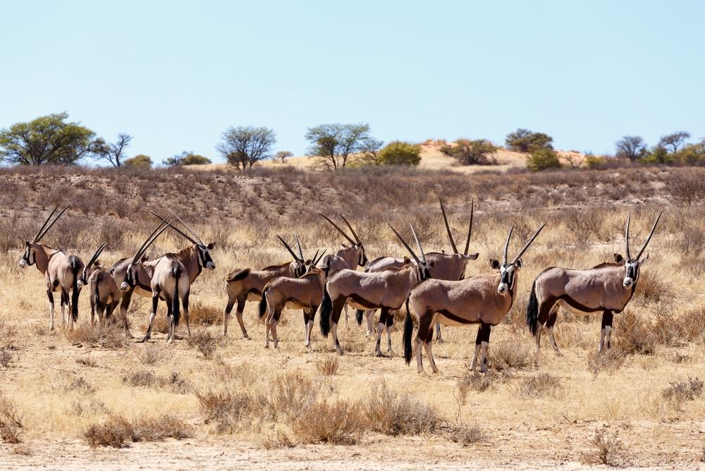 Roadtrip door Botswana