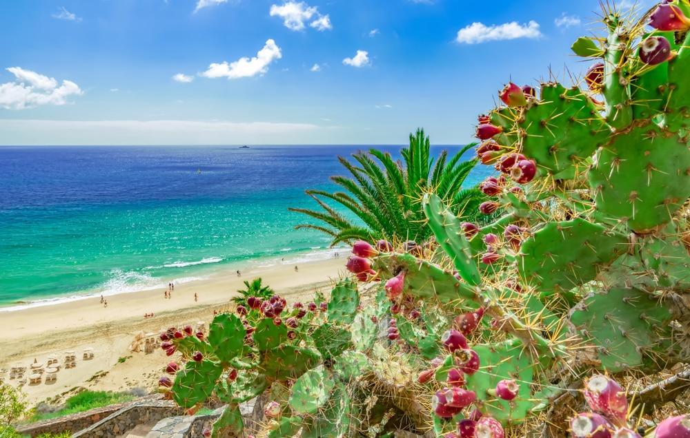 Het Spaanse eiland Fuerteventura