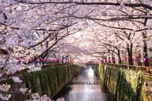 Bewonder de kersenbloesem in Tokio