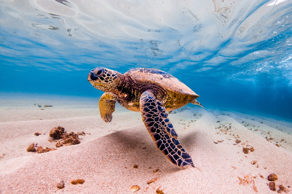 Snorkelen in Oahu