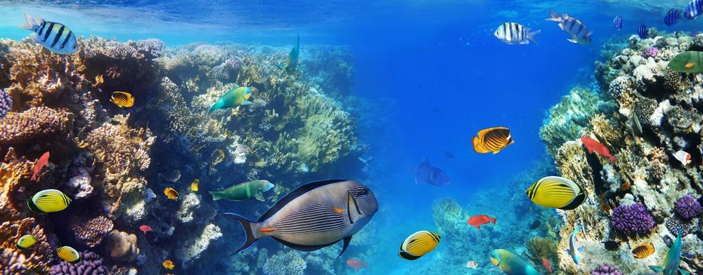 Ga snorkelen in de Roze Zee