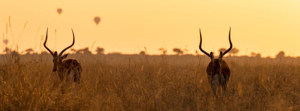 Kenia haar bekendste natuurpark