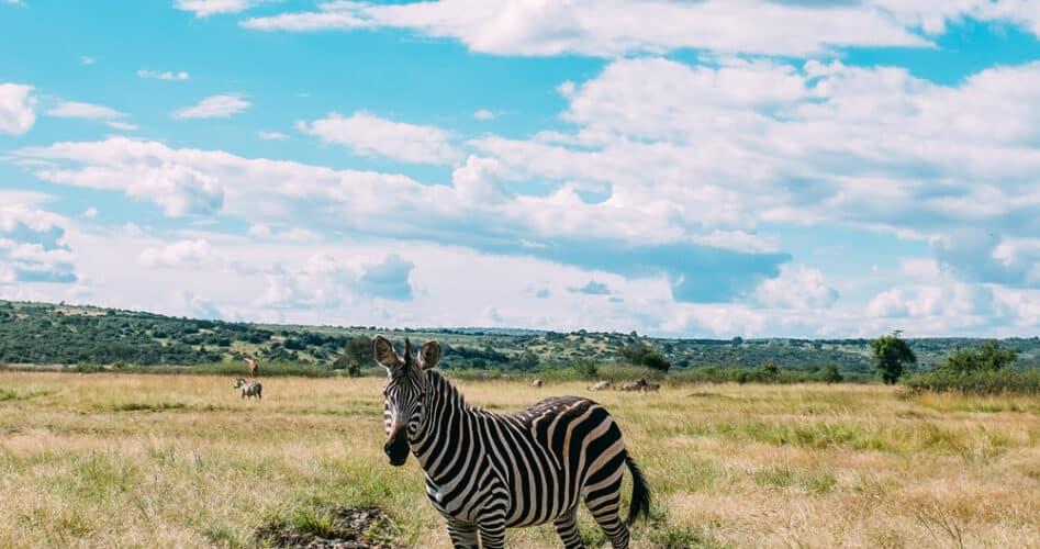 Rwandese dierenrijk