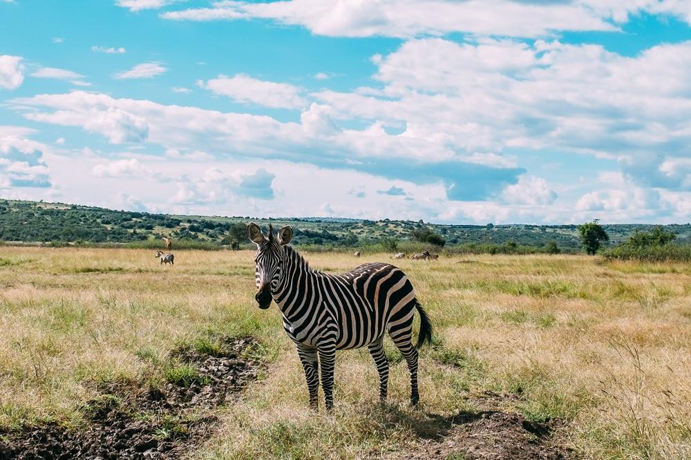 Social distancing in het Rwandese dierenrijk