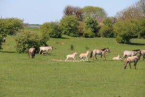 Spot wilde dieren in Wageningen