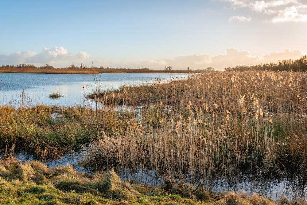 Ontdek het Nationaal Park De Biesbosch