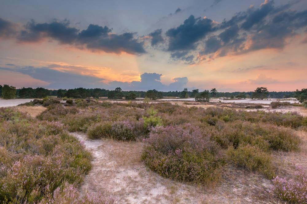 Maak een wandeling in het diverse natuurgebied