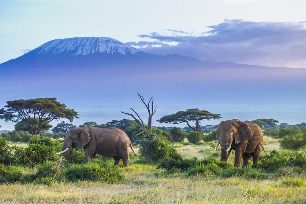 Een prachtig uitzicht op de Kilimanjaro
