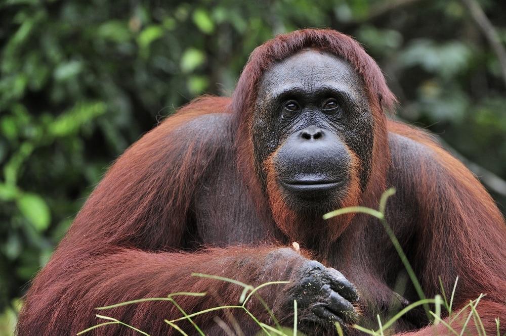 Een van de mooiste dieren van Indonesie