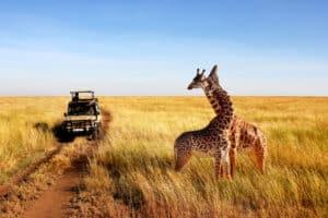 Ga op safari in het Serengeti Nationaal Park