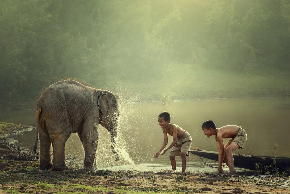 Bezoek het prachtige Indonesie en spot wilde dieren